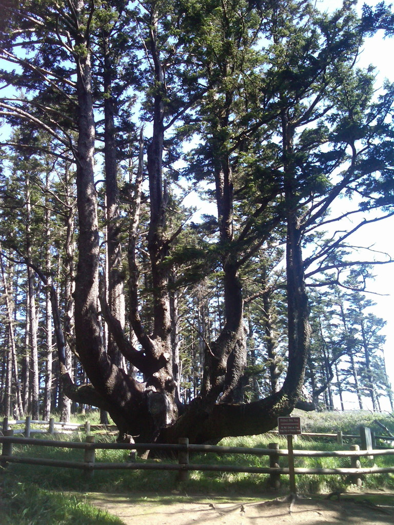 The Octopus Tree
