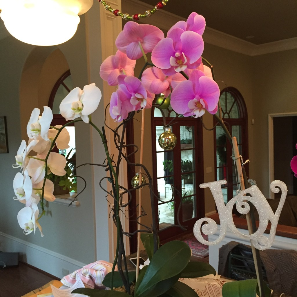 Mom's Christmas Orchid skills are on point, though.